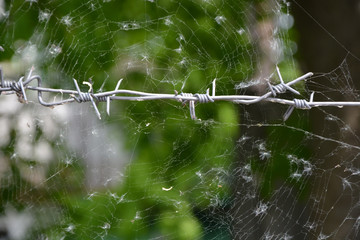 Barbed wire and spiderweb
