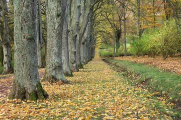 Bad Pyrmont,Bombergallee im Herbst