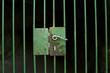 Locked cage door - 73384650