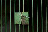 Locked cage door