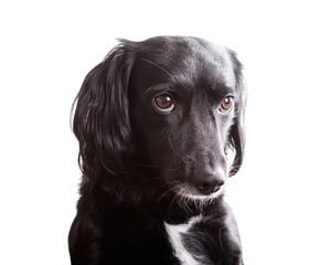 Cane isolato su bianco