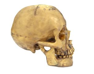 Human skull isolated on white background.