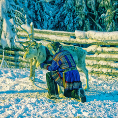 White reindeer with herder in winter lapland