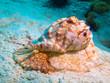 sea snail - 73393046