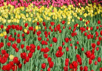 Flowers in Beijing park