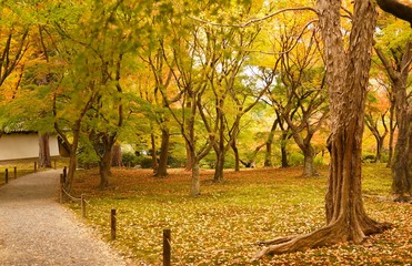 木々の中の散歩道