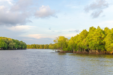 Mangrove forest and river at chanthaburi thailand