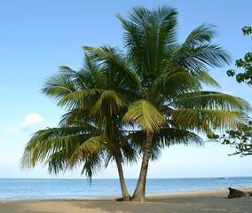 Palmiers sable blanc