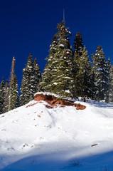 pine tree in the snow, colorado