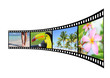 Film strip with pictures of tropical nature