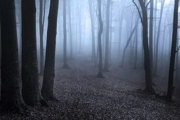 Blue fog in mysterious forest