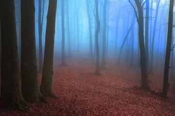 Beautiful view of blue fog in the forest during autumn