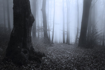 Dark trees in foggy forest