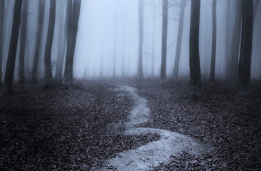 Dark trail in spooky forest during a foggy day