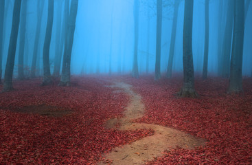 Trail through the trees in blue foggy forest
