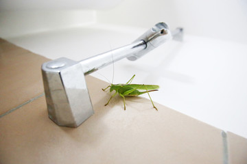 Close up of green grasshopper on bathroom wall