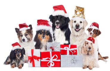 Hundegruppe mit Weihnachtsmütze und Geschenken