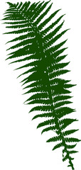 single green fern leaf silhouette on white