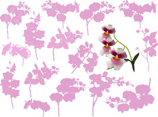 sixteen orchid branches isolated on white