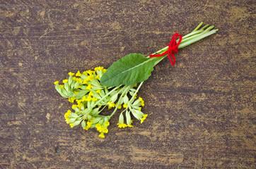 yellow spring primrose cowslip medical flower bunch