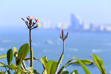 flowers with the background of sea and city