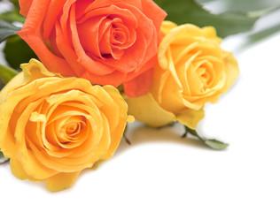 roses fleurs jaune et orange