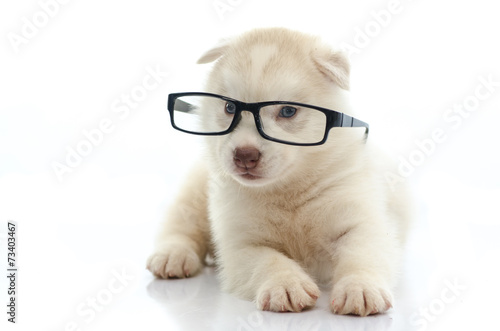 Fotobehang Dragen Cute siberian husky wearing glasses on white background