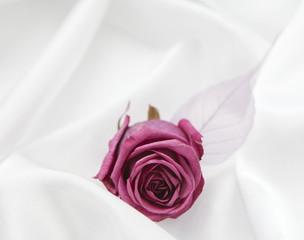 rose pourpre sur fond de satin blanc