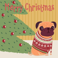 Pug sitting in the room by the Christmas trees