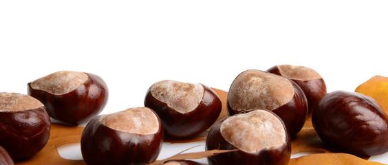 Horizontally many chestnuts autumn leaves on white background
