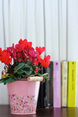 Flowerpot and books at the background