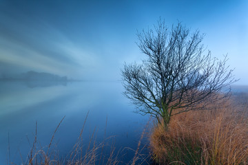tree by lake on misty morning