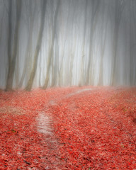 Path into the misty autumn forest