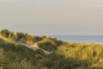 Dunes in early morning light