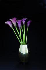 Lila Callas in Vase