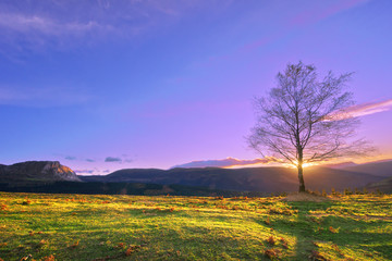 lonely treee at sunset near Itxina mountain