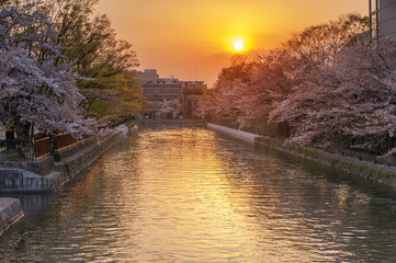 Okazaki Canal during the spring cherry blossom season.