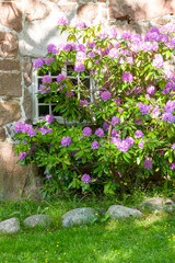 Scandinavian architecture. Flowers decorating window in the
