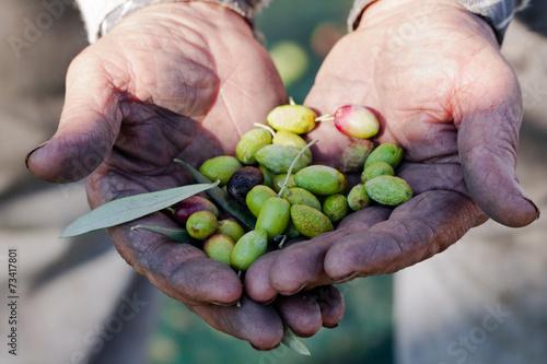 Billede Olive in mano