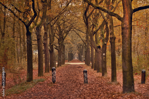 canvas print picture Herbst Laub