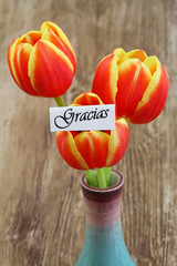 Gracias card ( thank you in Spanish) with red and yellow tulips