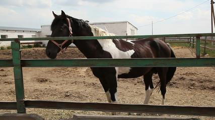 horses on the farm 4