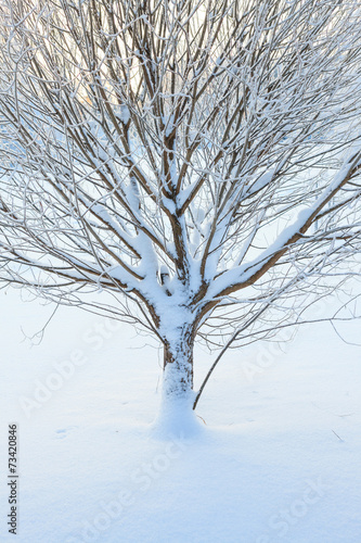 Abstract closeup of a tree in winter - 73420846