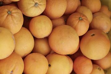 Italy, sicily, sicilian oranges
