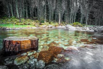 ceppo in laghetto alpino