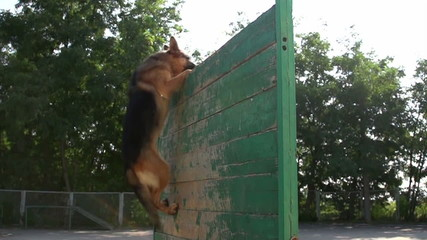 German shepherd jumping over the fence, Slow Motion 1