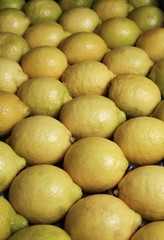 Italy, Sicily, sicilian lemons for sale
