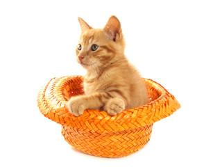 Kitten in hat