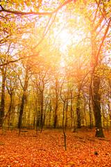 Sunlit autumn forrest