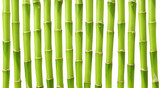 Fototapety Green bamboo stems isolated on white background